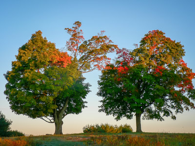Noted Boston fine art photographer David Lee Black explores the seasons of Two Trees in Autumn, Mount Pollusk, Amherst, Massachusetts.