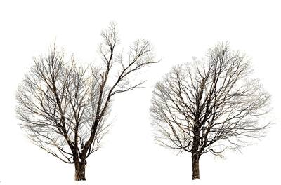 Noted Boston fine art photographer David Lee Black explores the seasons of Two Trees in Winter, Mount Pollusk, Amherst, Massachusetts.
